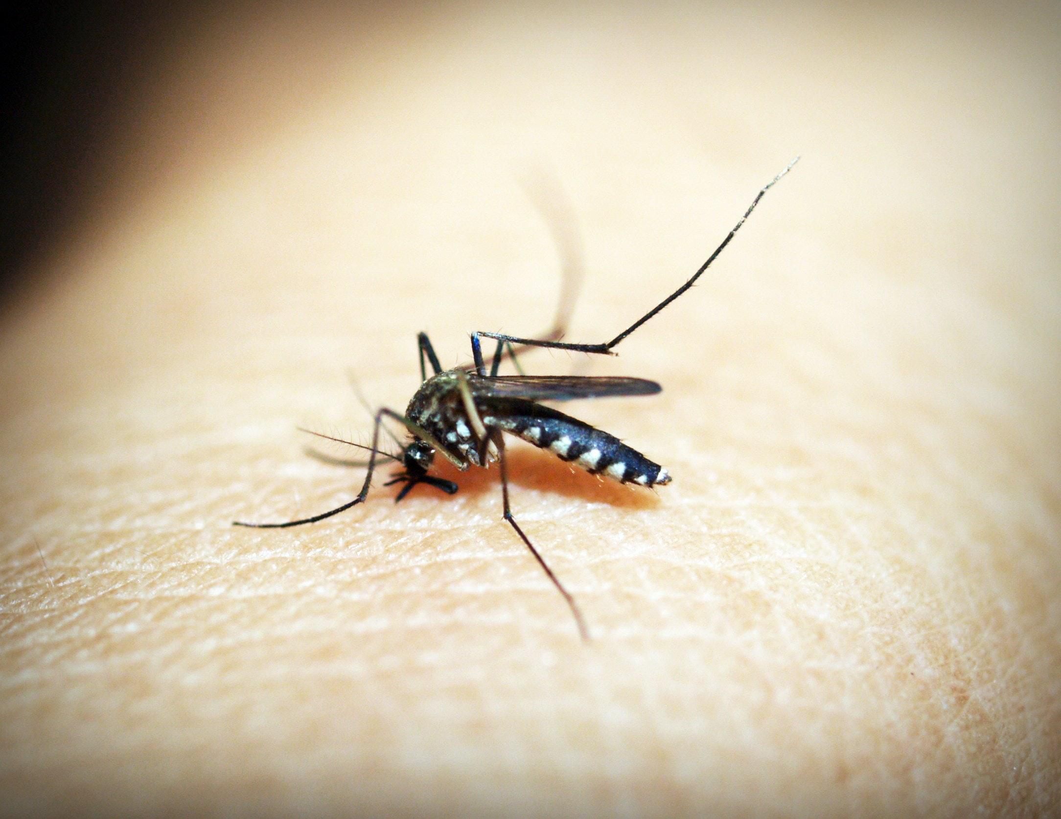 Zika virus awareness